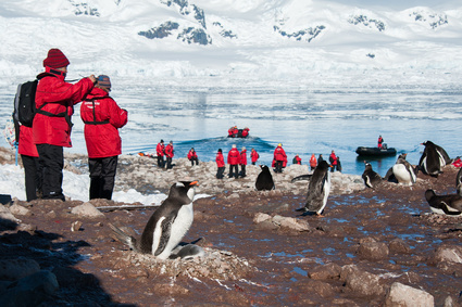 Picturing adelie penguins on the beach